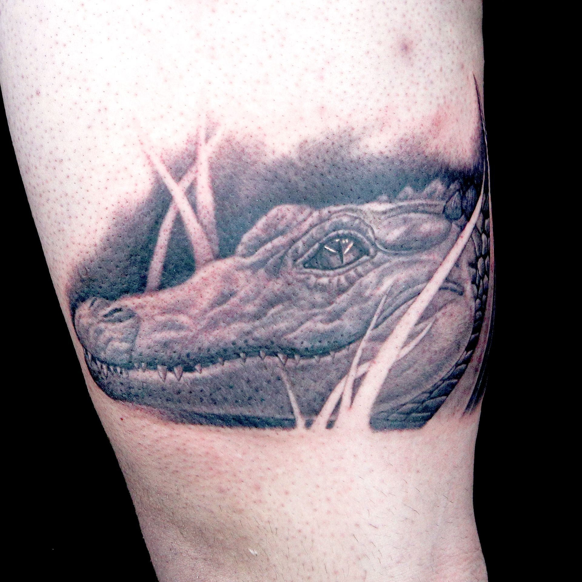 Elimination tattoo live animal reference ink master for Black anchor collective tattoo